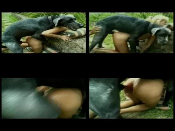 179240137 0816 ztub black dog fuck blondie - Black Dog Fuck Blondie - ZooSex Tube