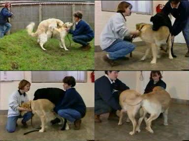 179240206 0833 ztub dogs sex - Dogs Sex - ZooSex Tube